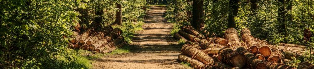 Jogosult erdészeti szakszemélyzet alapképzés