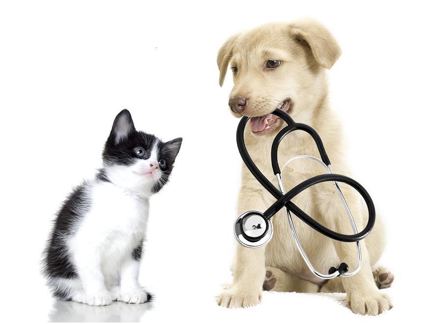 128/2009. (X. 6.) FVM rendelet az állatgyógyászati termékekről
